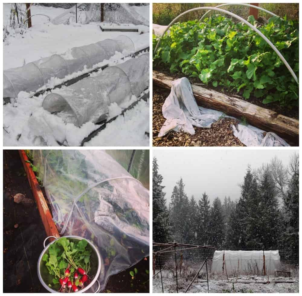 How to plant your fall winter garden for Winter garden