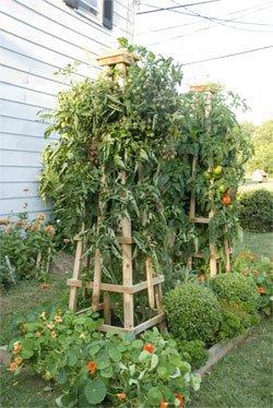 The Best Tomato Trellis Amp Tomato Cages Family Food Garden
