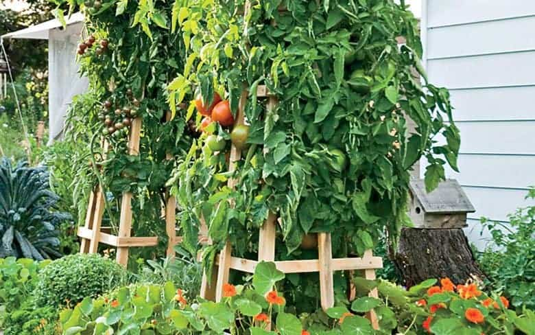 The Best Tomato Trellis Amp Tomato Cages Family Food Garden