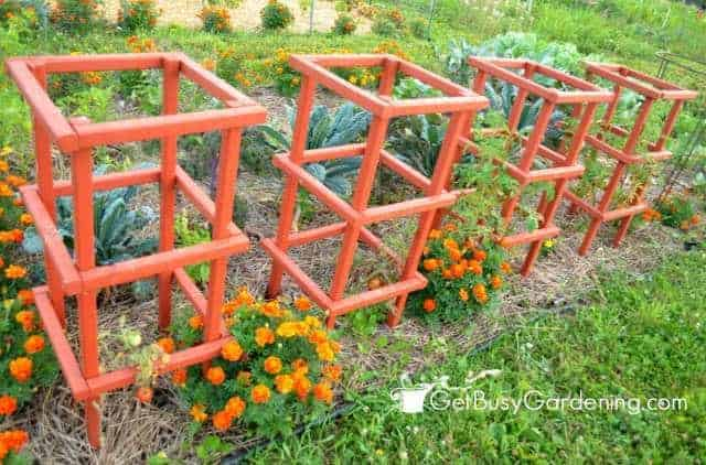 The best tomato trellis cages family food garden