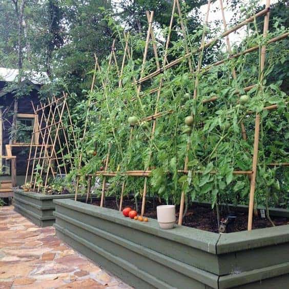 The best diy tomato trellis cages Tomato garden design