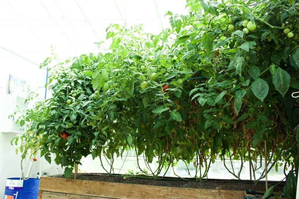 How To Build A Greenhouse Diy Ideas
