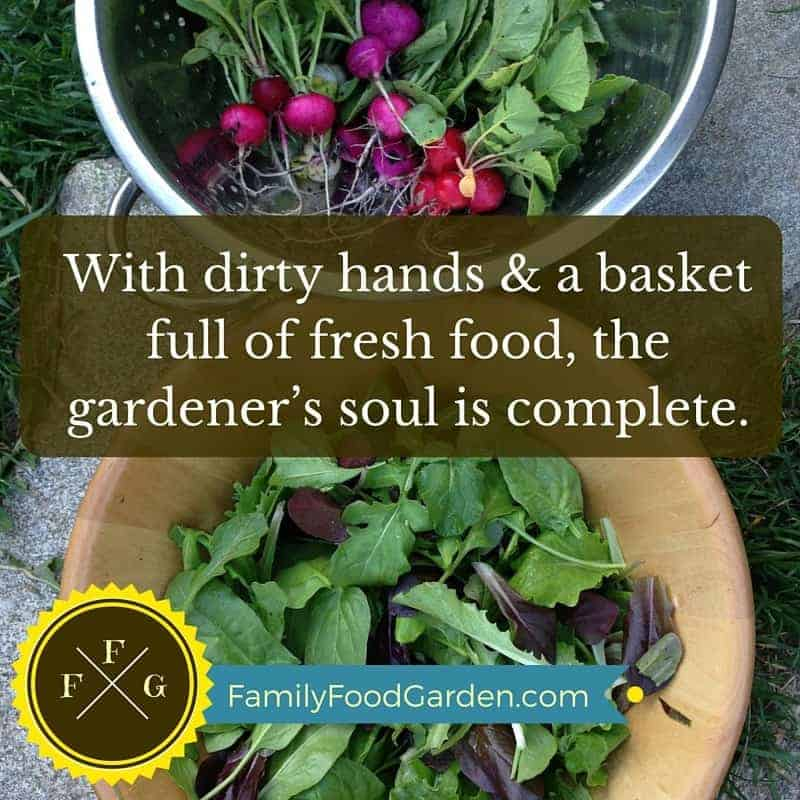 Grow Fresh & Healthy Food for Your Family