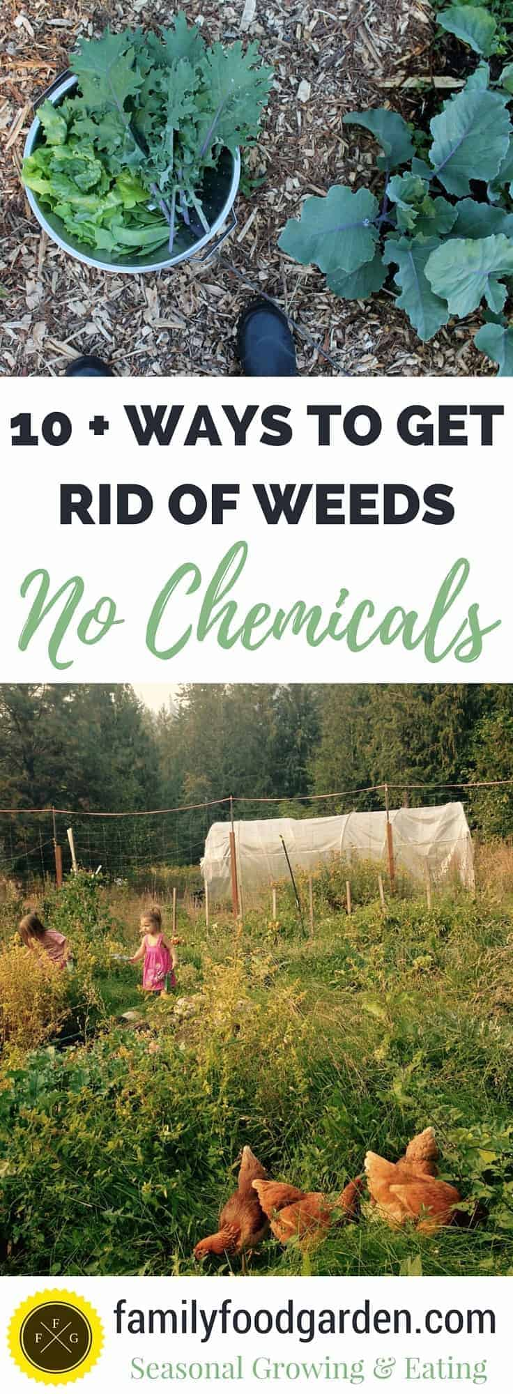 how to get rid of weeds in garden. Believe It Or Not, There Are Many Ways To Get Rid Of Garden Weeds Naturally. How In P