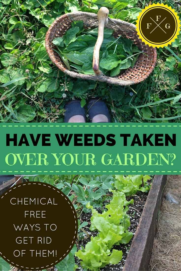 Stop weeds in flower beds - Believe It Or Not There Are Many Ways To Get Rid Of Garden Weeds Naturally