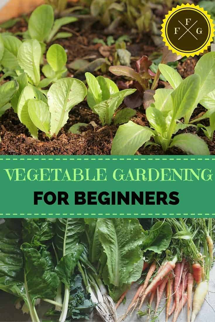Vegetable gardening for beginners family food garden for Gardening for beginners