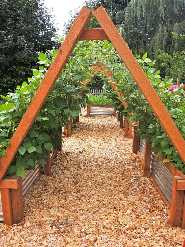 Ordinary Vertical Gardening Trellis Ideas Part - 4: Beautiful Vertical Gardening