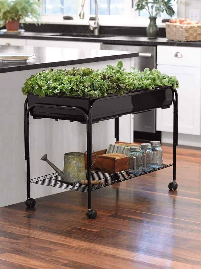 Indoor Gardening: Ideas to Grow Food Inside