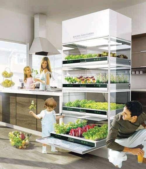 Indoor gardening: how to grow food inside