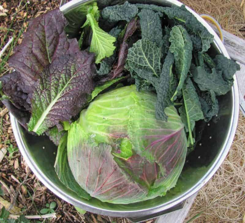 Crops to Plant for a Fall Garden