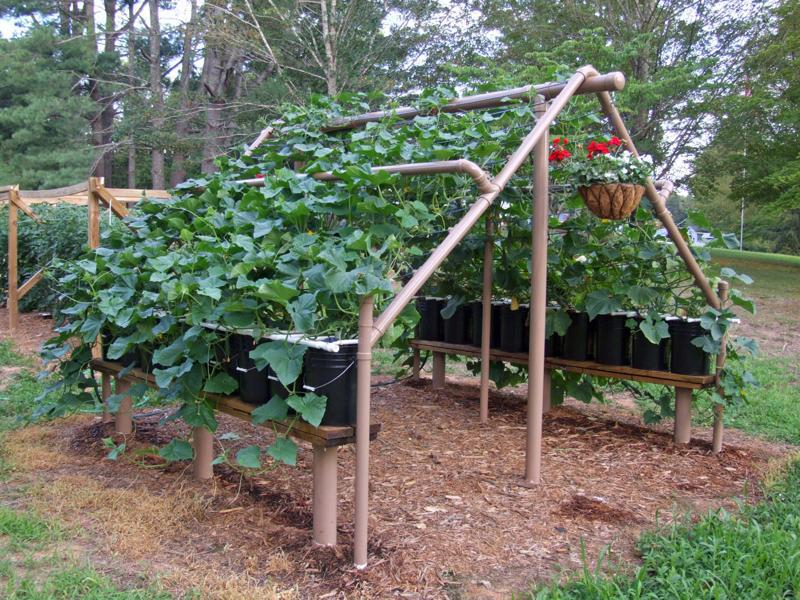 Vegetable Trellis Ideas Part - 32: Family Food Garden