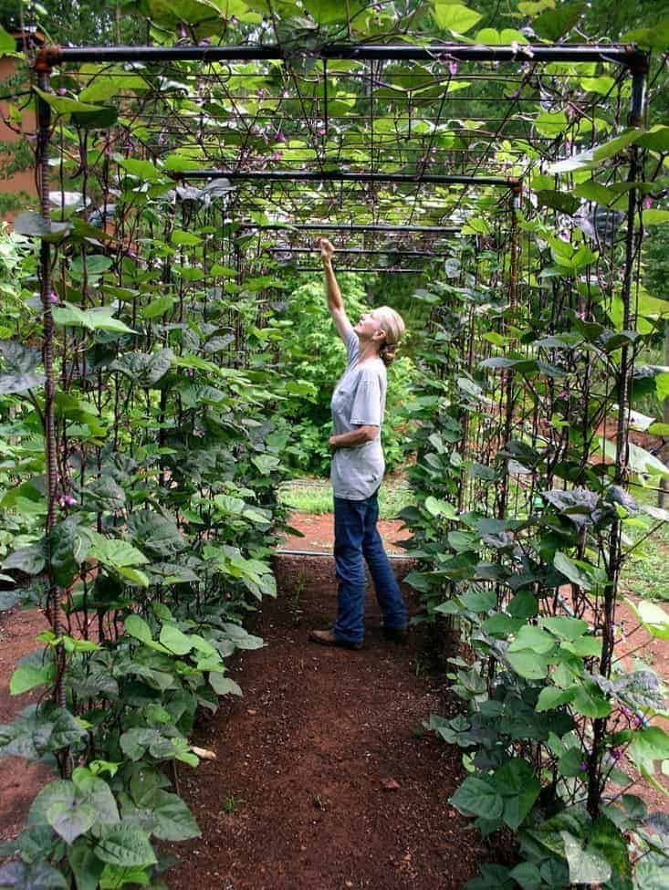 Amazing vertical gardening ideas family food garden for Indoor gardening green beans
